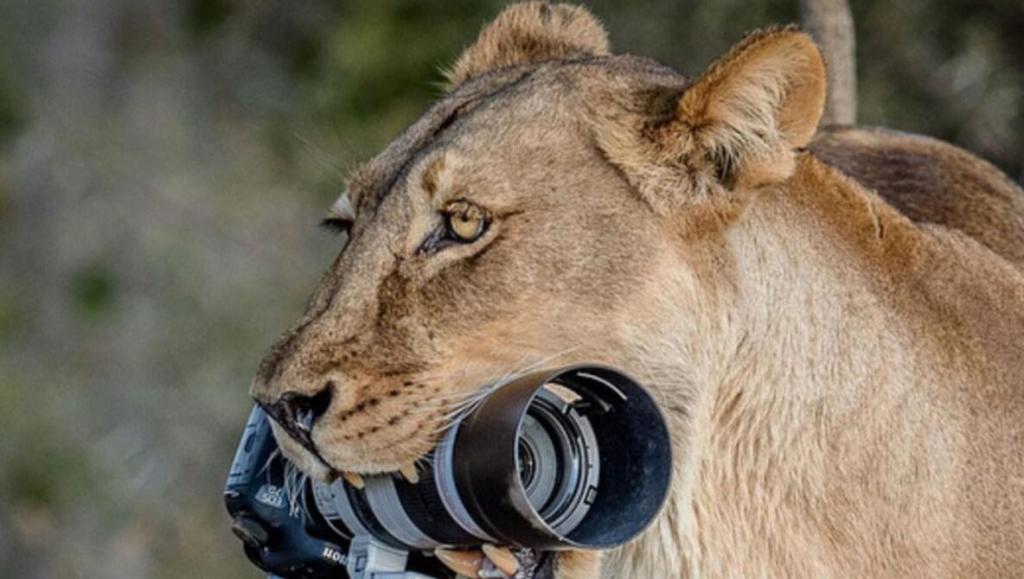 leoa rouba camera