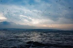 10 citações de escritores que farão de você um fotógrafo melhor 9