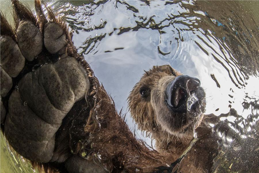 Winners of the 2019 BigPicture Natural World Photography Competition (9)