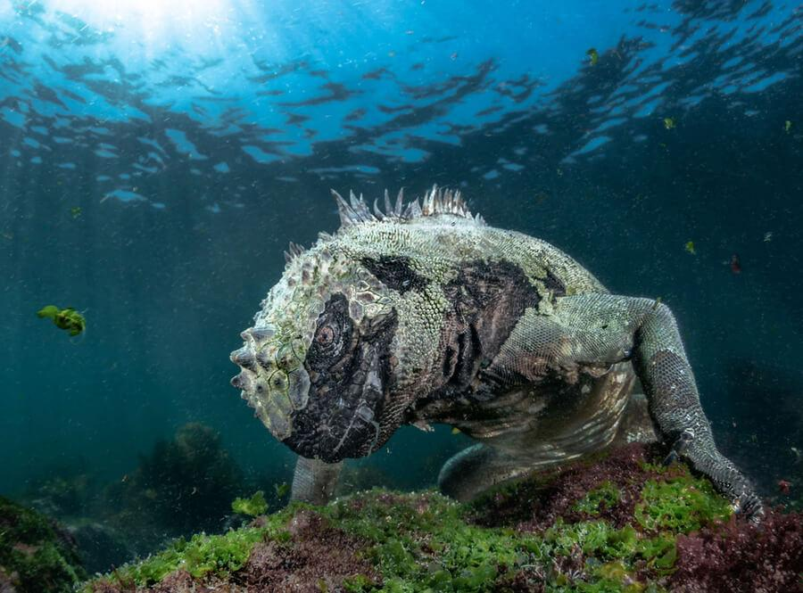 Winners of the 2019 BigPicture Natural World Photography Competition 5