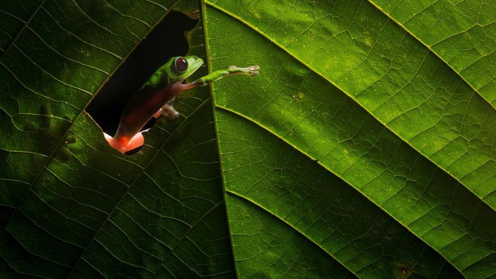 Tutorial: Uma Configuração Simples De Um Flash Para Imagens Incríveis Da Vida Selvagem